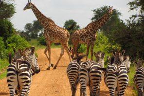 Tanzania rondreis met afwisseling